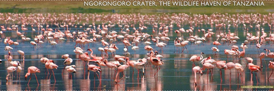 Flamingo at Ngorongoro Crater, East Africa