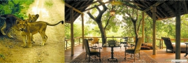 Royal Malewane Lodge - Wildlife