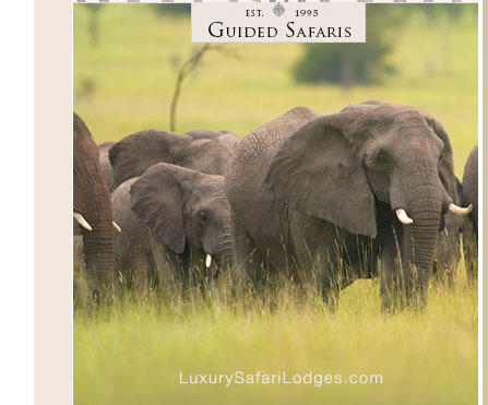 Singita Ebony Lodge Rates & Packages