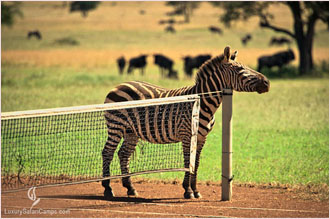 Tennis on Safari - Luxury Safari Camps