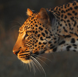 Guided Safaris South Africa
