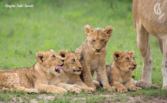 Family Safari, Wildlife Game Viewing