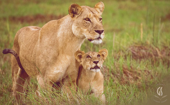 Family Safari Phenomenal Wildlife.