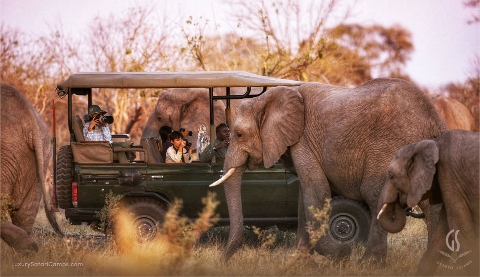 luxury safaris for families with young children.