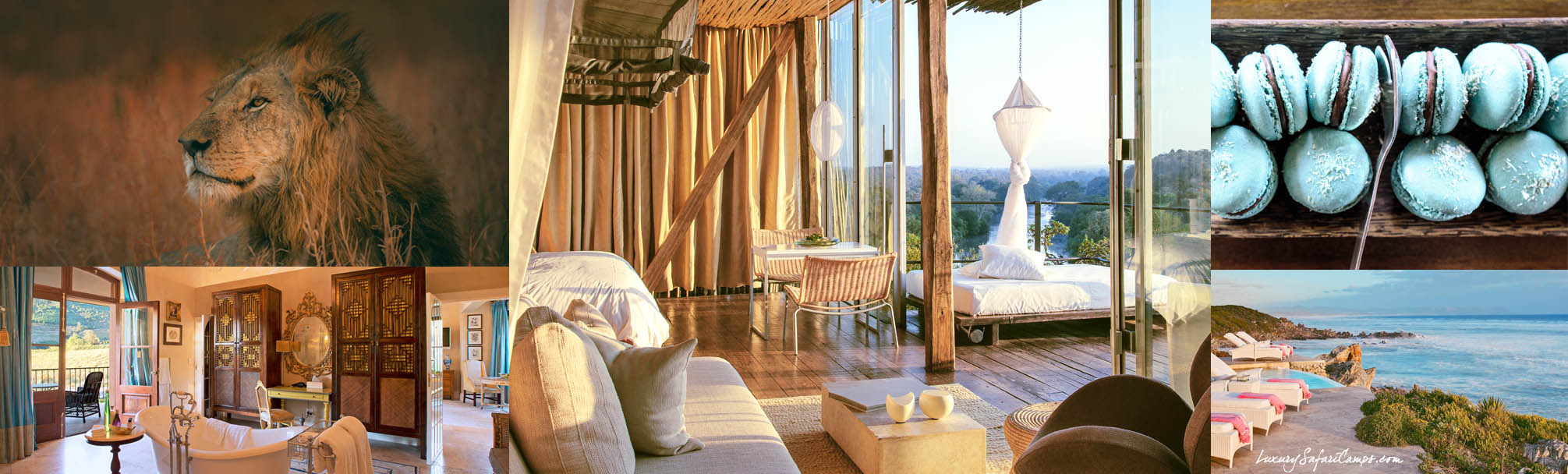 A Royal South African Safari