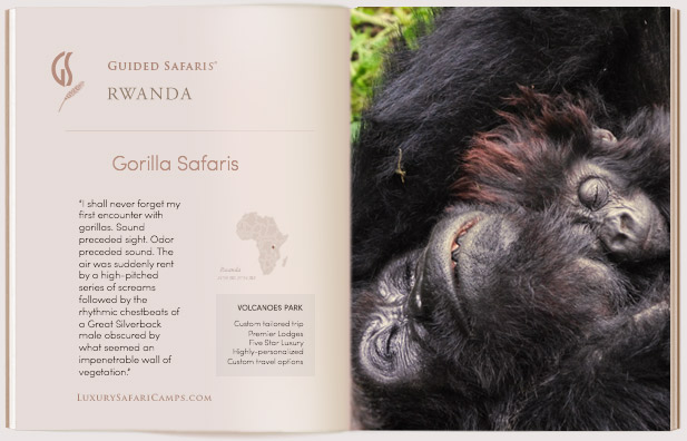 Guided Safaris Rwanda